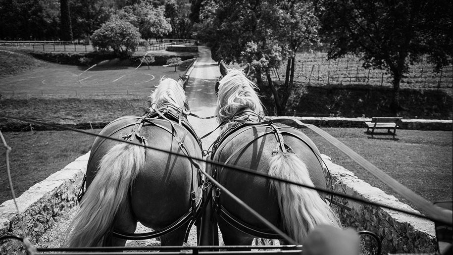 Landscape quote carriage ride 915x515