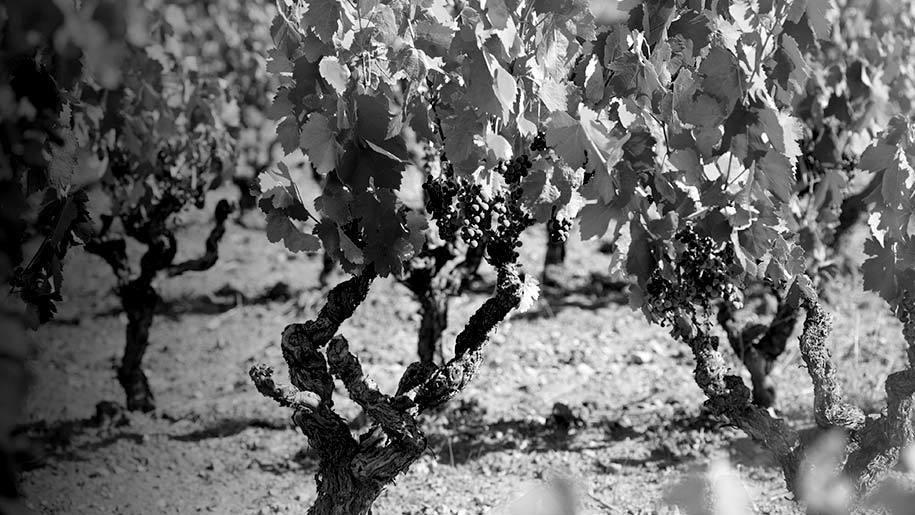 Landscape quote vines 915x515