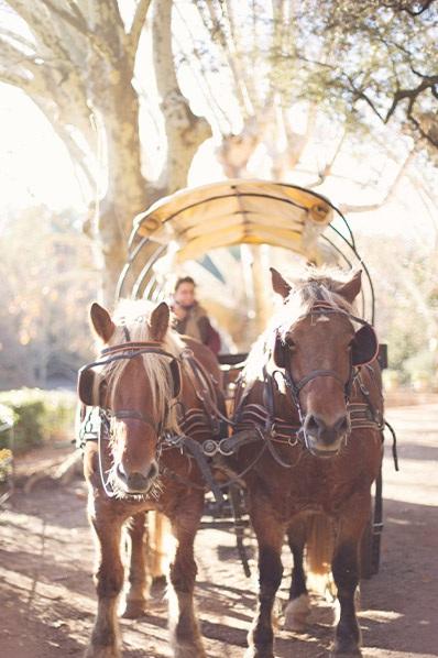 Portrait primary horsescarriage 398x598